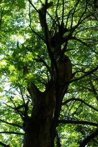 Sweet_Chestnut_Forest