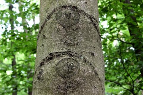 tree-eyes-190683_640